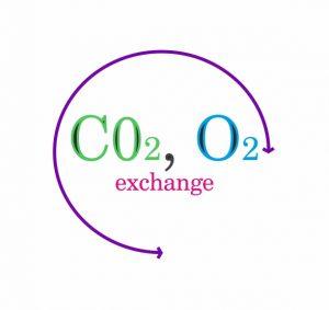 Опция газоанализ и капнометрия в спирометре МАС2-С